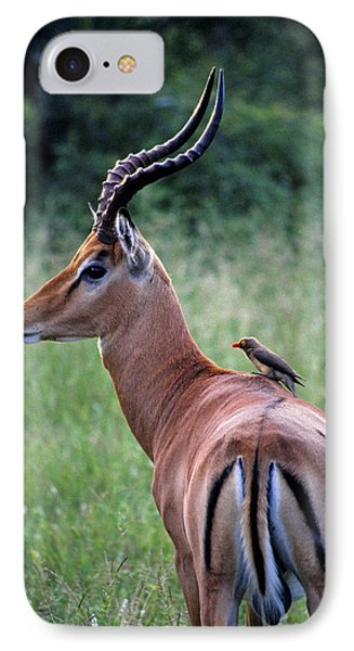 IPhone Case featuring the photograph Oxpecker And Impala by Dennis Cox WorldViews