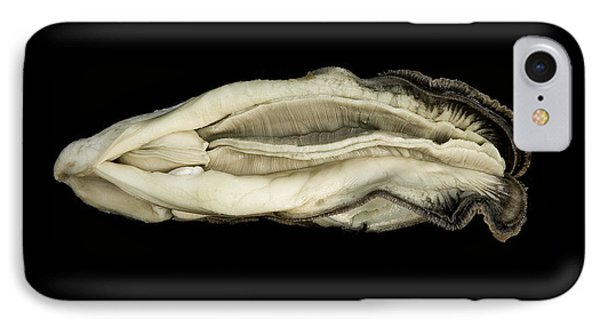 Oyster Suspended In Darkness Phone Case by Andy Frasheski