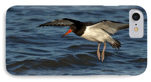 IPhone Case featuring the photograph Oystercatcher by Paul Scoullar