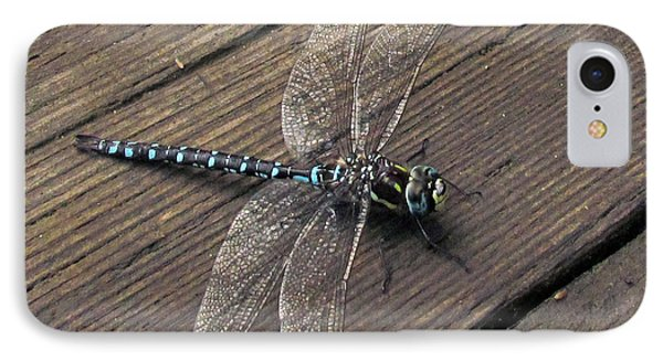 Pacific Forktail IPhone Case by I'ina Van Lawick