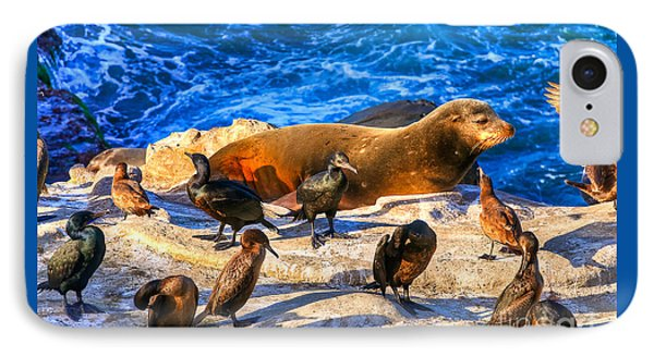 IPhone Case featuring the photograph Pacific Harbor Seal by Jim Carrell
