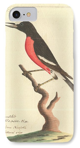 Pacific Robin IPhone Case