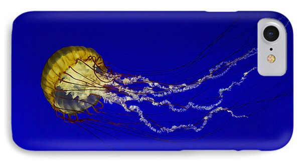 Pacific Sea Nettle IPhone Case by Mark Kiver