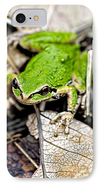Pacific Tree Frog 2a IPhone Case by Sharon Talson