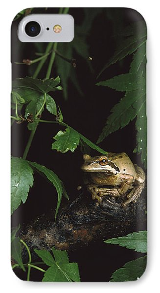 Pacific Tree Frog North America IPhone Case by Gerry Ellis