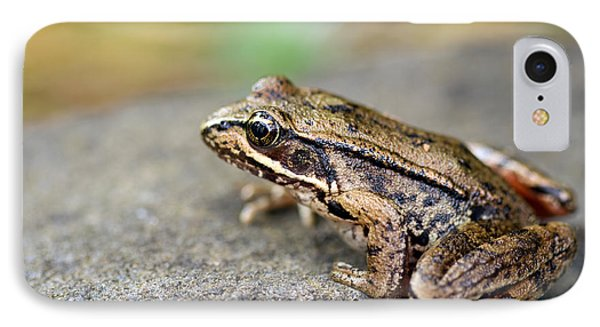 Pacific Tree Frog On A Rock Phone Case by David Gn