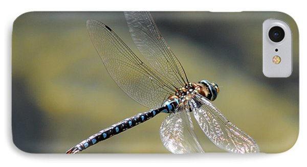 Paddletail Darner In Flight IPhone Case by Vivian Christopher