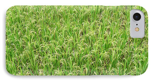 Paddy Field IPhone Case by Yew Kwang