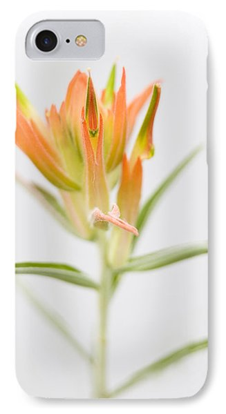 Paintbrush-high Key IPhone Case by Morris  McClung