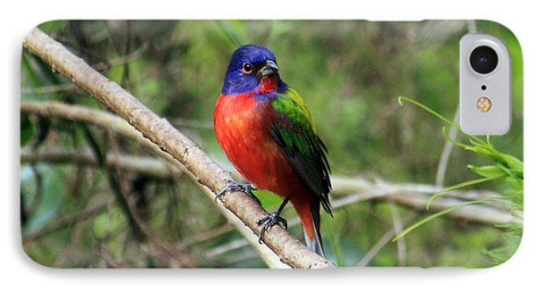 IPhone Case featuring the photograph Painted Bunting Photo by Meg Rousher