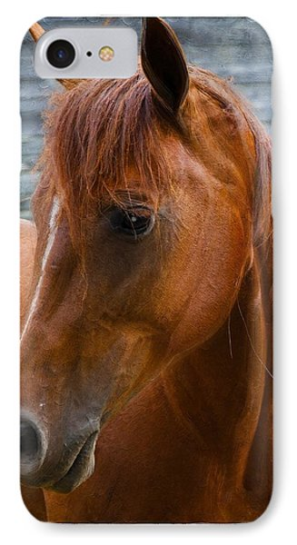 Painted Horse IPhone Case by Diana Boyd