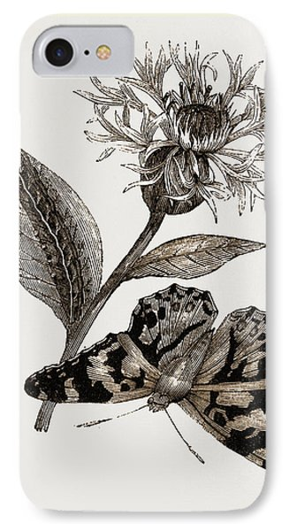Painted Lady And Alpine Bluebottle IPhone Case by Litz Collection