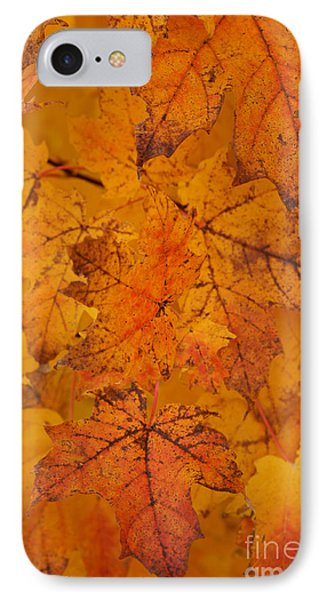 IPhone Case featuring the photograph Painted Leaves Of Autumn by Linda Shafer