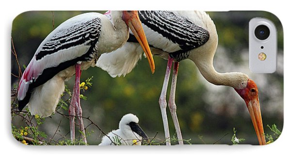 Painted Storks & Young One IPhone Case by Jagdeep Rajput