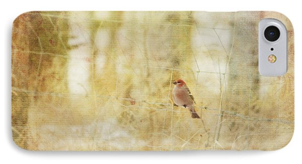 Painterly Image Of A Male Pine Grosbeak Phone Case by Roberta Murray