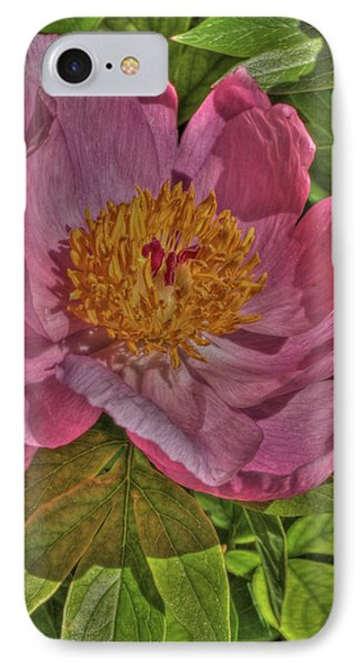 Painterly Peony IPhone Case by Harold Rau