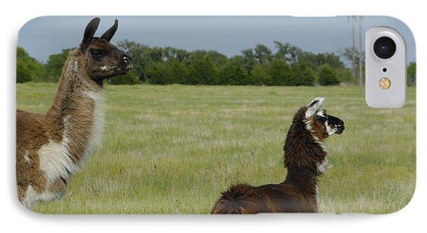 Pair Of Alpacas Phone Case by Charles Beeler
