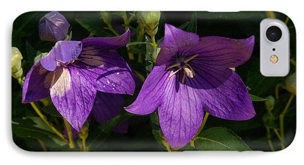 Pair Of Balloon Flowers IPhone Case by Douglas Barnett