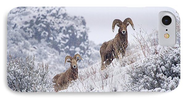 Pair Of Winter Rams Phone Case by Mike  Dawson