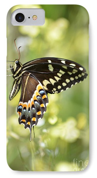 Palamedes Swallowtail 2 IPhone Case