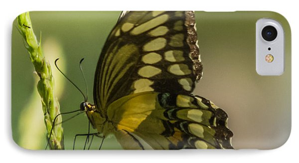 IPhone Case featuring the photograph Palamedes Swallowtail by Jane Luxton