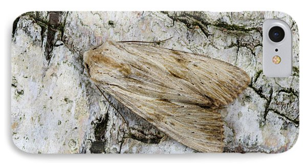 Pale Pinion Moth IPhone Case by Nigel Downer