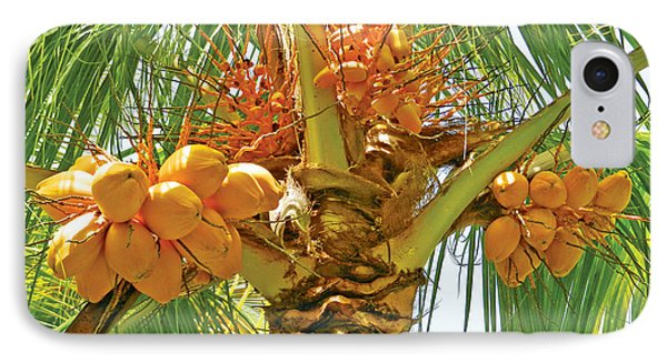 Palm Tree With Coconuts IPhone Case by Val Miller