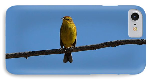 Palm Warbler IPhone Case