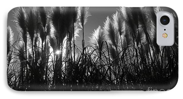 Pampas Grass Tufts In Silhouette  IPhone Case