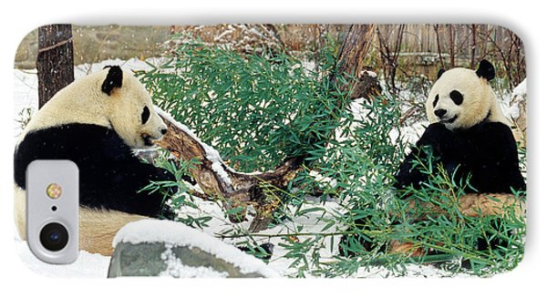 IPhone Case featuring the photograph Panda Bears In Snow by Chris Scroggins