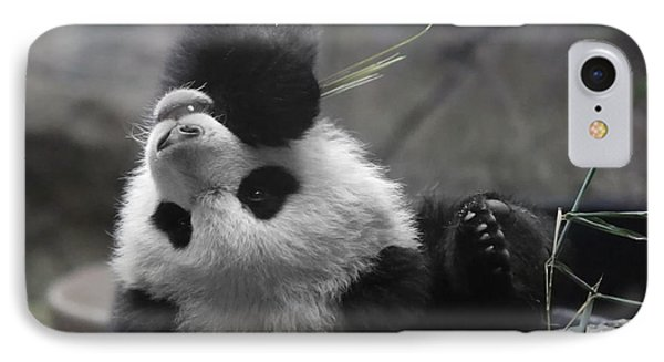 Panda Cub At National Zoo Phone Case by Jack Nevitt