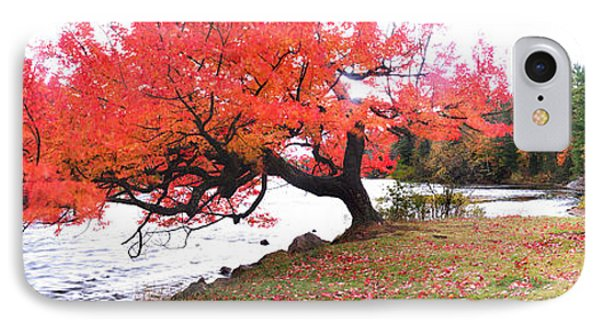 Panorama Of Red Maple Tree, Muskoka Phone Case by Henry Lin