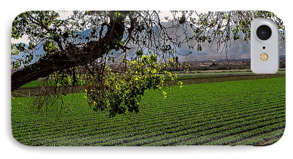 Panoramic Of Winter Lettuce Phone Case by Robert Bales