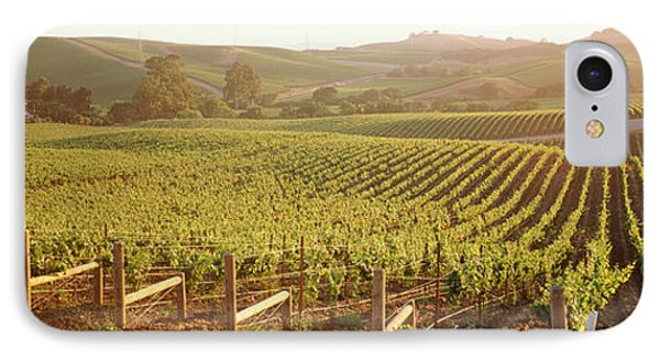 Panoramic View Of Vineyards, Carneros IPhone Case by Panoramic Images