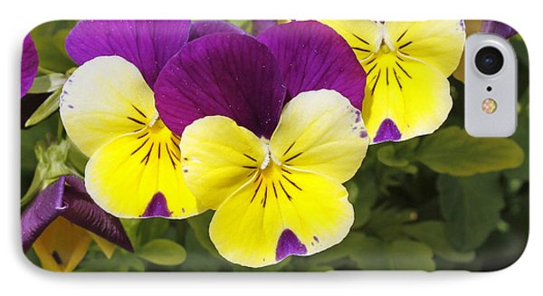 Pansies IPhone Case by Denise Pohl