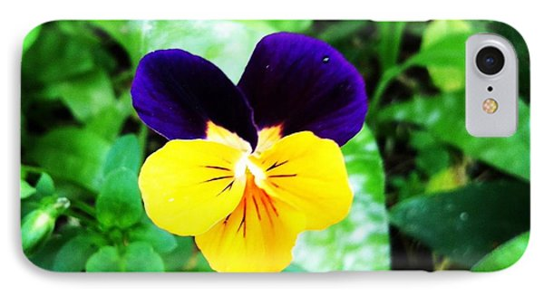 Pansy IPhone Case by Izabela Bienko