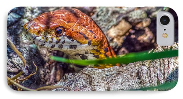Pantherophis Guttatus IPhone Case by Rob Sellers