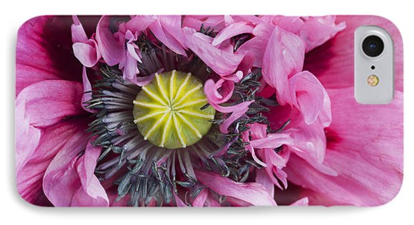 Papaver Somniferum Pink  Phone Case by Tim Gainey