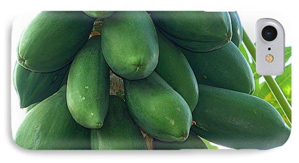 Papaya Tree With Green Papayas IPhone Case by Yali Shi