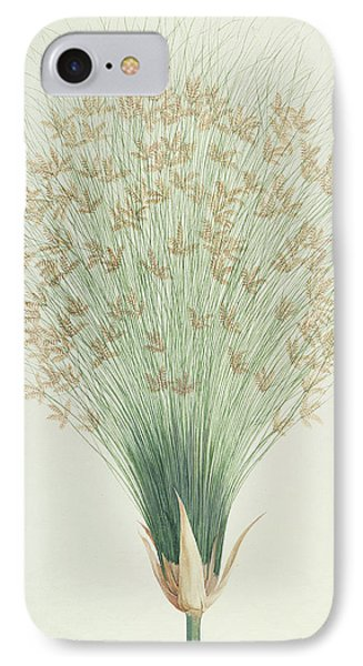 Papyrus IPhone Case by James Bruce