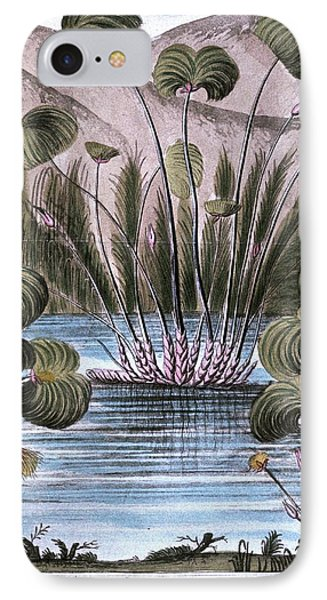 Papyrus Reed (cyperus Papyrus) IPhone Case by Universal History Archive/uig