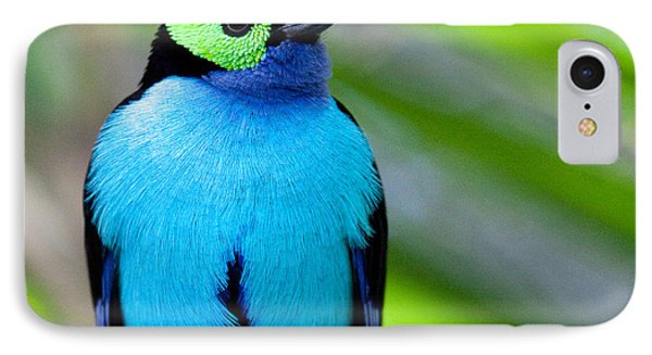 Paradise Tanager IPhone Case by Nathan Rupert