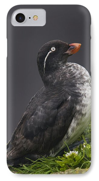 Parakeet Auklet Sitting In Green Phone Case by Milo Burcham
