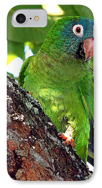 Parakeet In A Tree IPhone Case