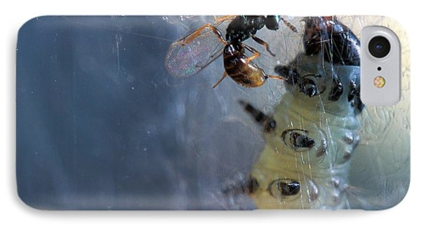 Parasitic Wasp On Leafroller Larva IPhone Case