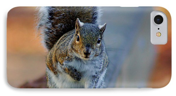 IPhone Case featuring the photograph Park Squirrel I by Daniel Woodrum