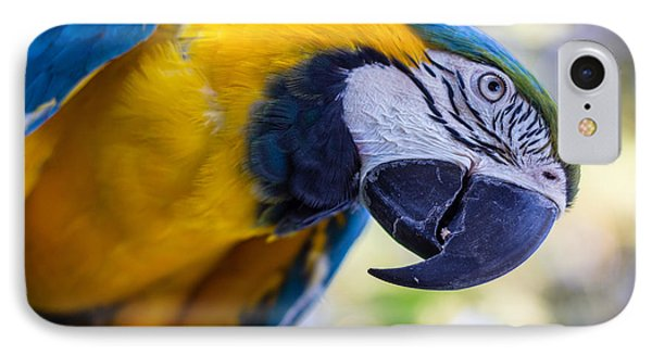 Parrot IPhone Case by Randy Bayne