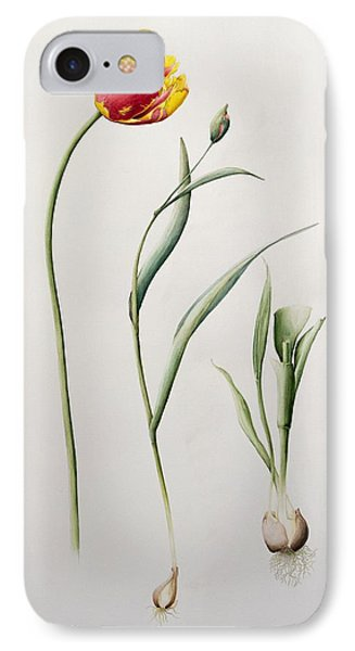 Parrot Tulip Phone Case by Iona Hordern