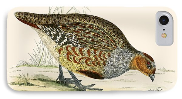 Partridge IPhone Case by Beverley R Morris