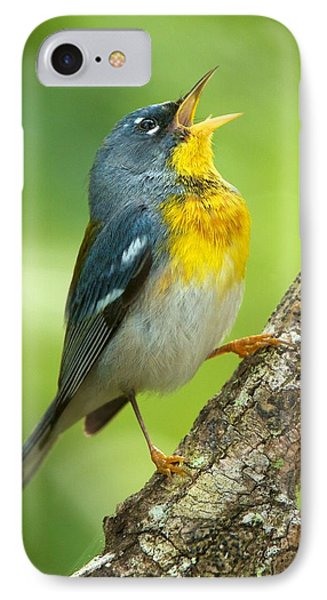 Parula Song IPhone Case